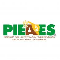 Logo of Pieaes